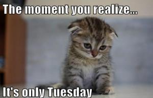 Tuesday_Meme